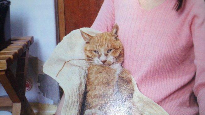 집 나간 고양이가 5년 만에 옆집에서 발견됐다에 대한 이미지 검색결과