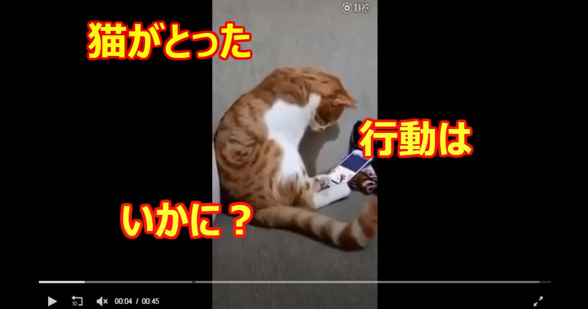 cat - スマホに亡くなった飼い主の顔が表示されるや否や猫がとった行動は…?