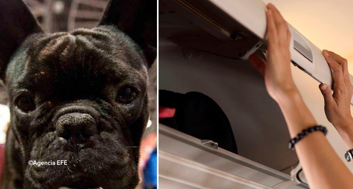 cover 4bulldoog.png?resize=300,169 - Muere un perro en un vuelo de United Airlines luego de ser encerrado en el portaequipajes