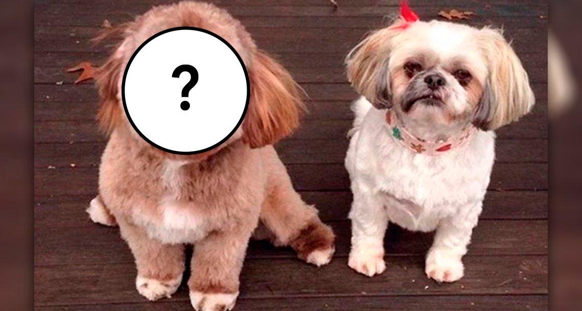 cover 4pereoe.png?resize=1200,630 - Perro con cara de humano es viral en todas las redes sociales