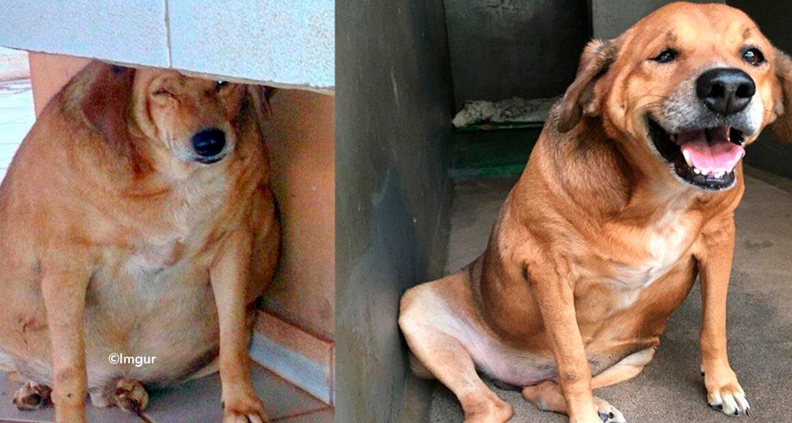 cover 4pereorer - Un hombre cambia la vida de un perro obeso y abandonado, la historia ha conmovido a cientos de personas