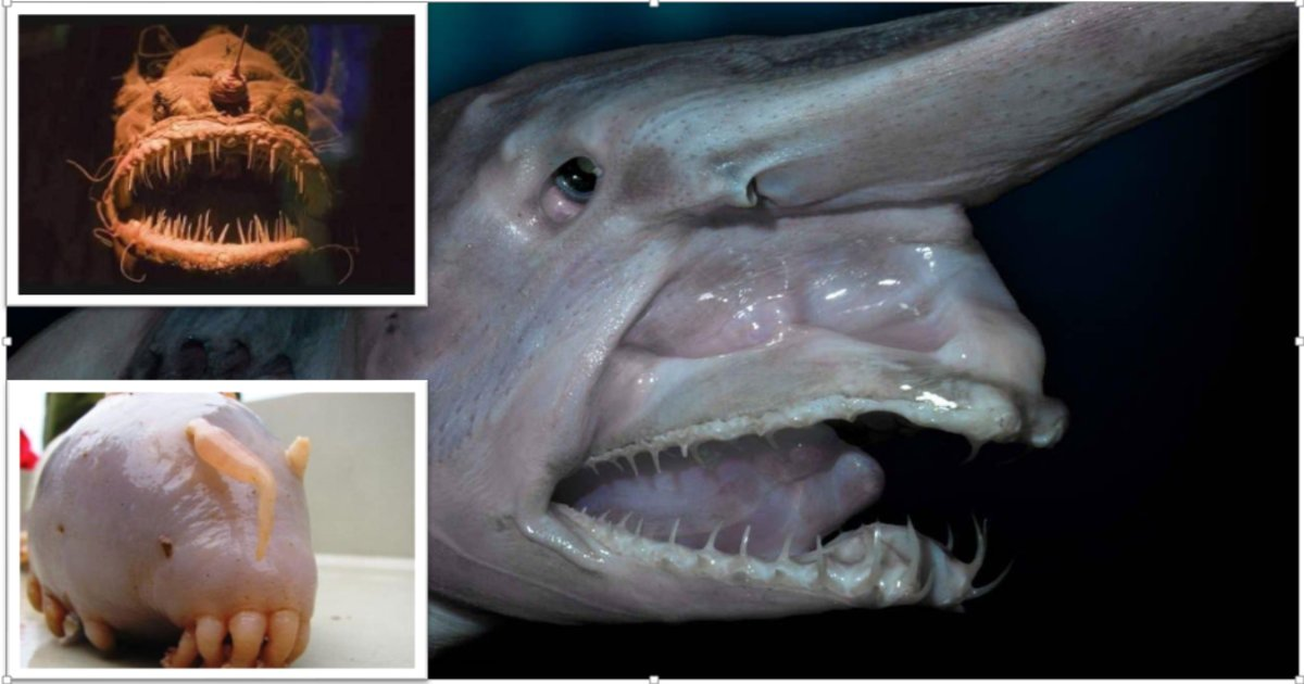 creturethumb2.png?resize=300,169 - 10 Terrifying Creatures That will Keep Your Nightmare Fueled