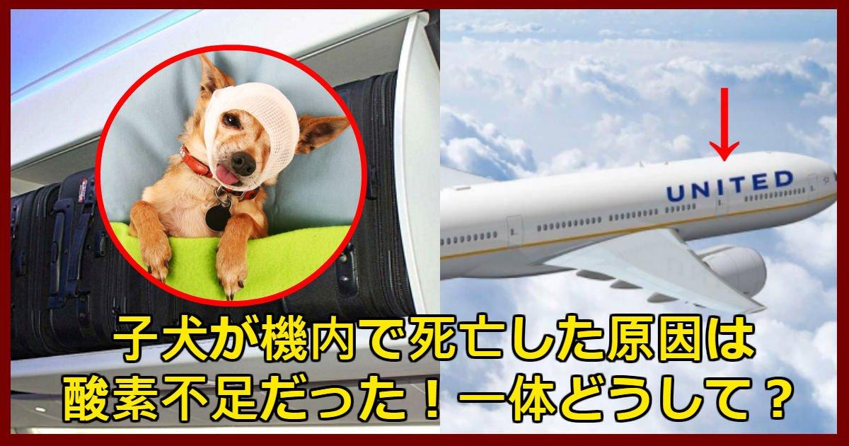 dog 2.jpg?resize=1200,630 - ユナイテッド航空機内で子犬を頭上に収納して死亡した事件