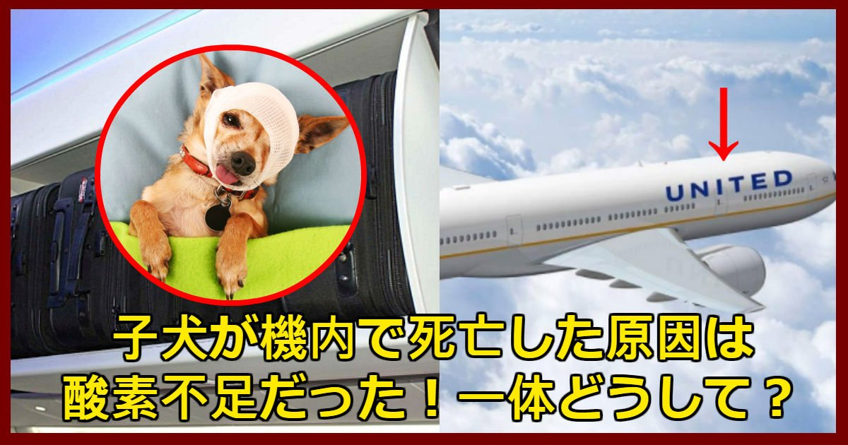 dog 2 - ユナイテッド航空機内で子犬を頭上に収納して死亡した事件