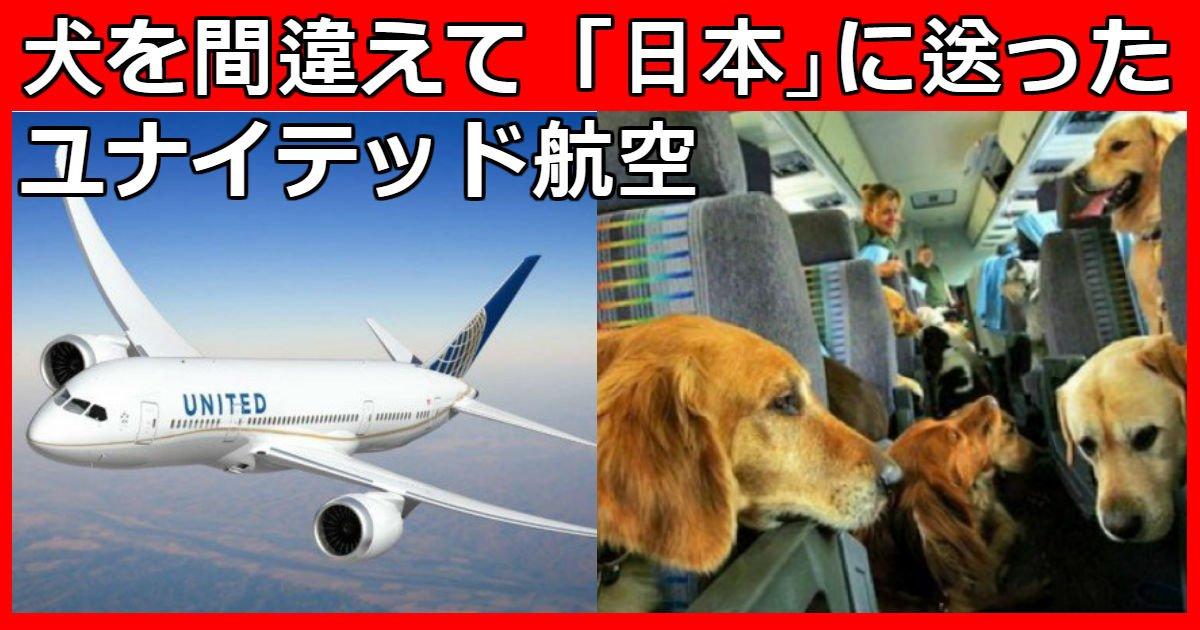 dog 3.jpg?resize=1200,630 - アメリカに送るはずだったペットを「日本」に送ったユナイテッド航空