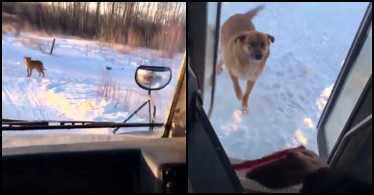 dog 4.jpg?resize=300,169 - Bus Driver Secretly Stops Every Day ToProvide A Bag Of Food To Stray Dog Who Waits For Her
