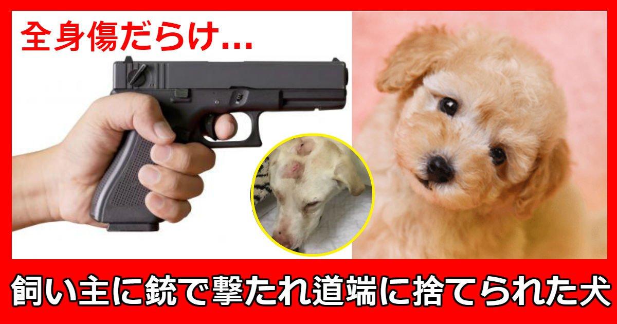 dog 5 - 飼い主の虐待で「傷だらけ」の状態で「しっぽ」振りながら助けを求める犬