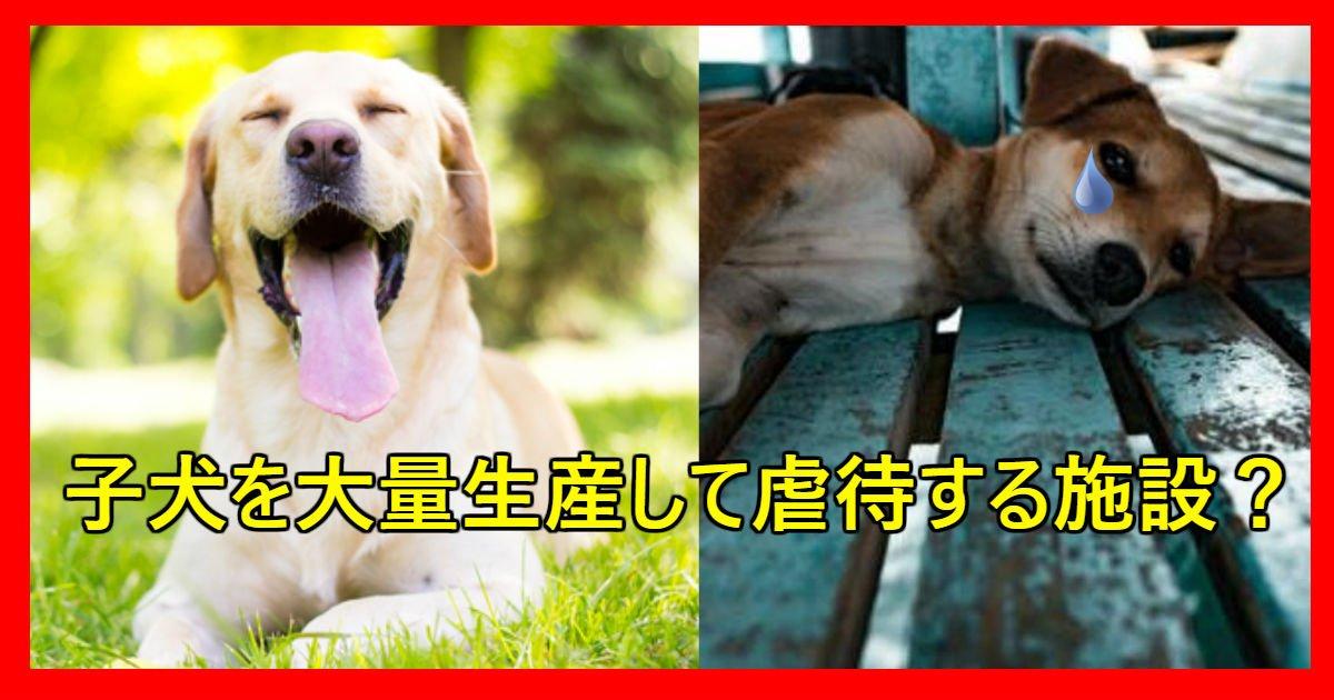 dog.jpg?resize=1200,630 - 400匹を飼っている「子犬工場」が虐待の疑い?!
