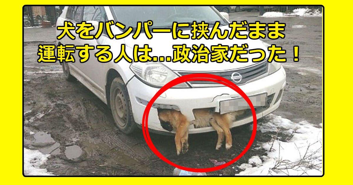 doggg.jpg?resize=1200,630 - はねられた犬の死体をバンパーに挟まったまま運転する政治家