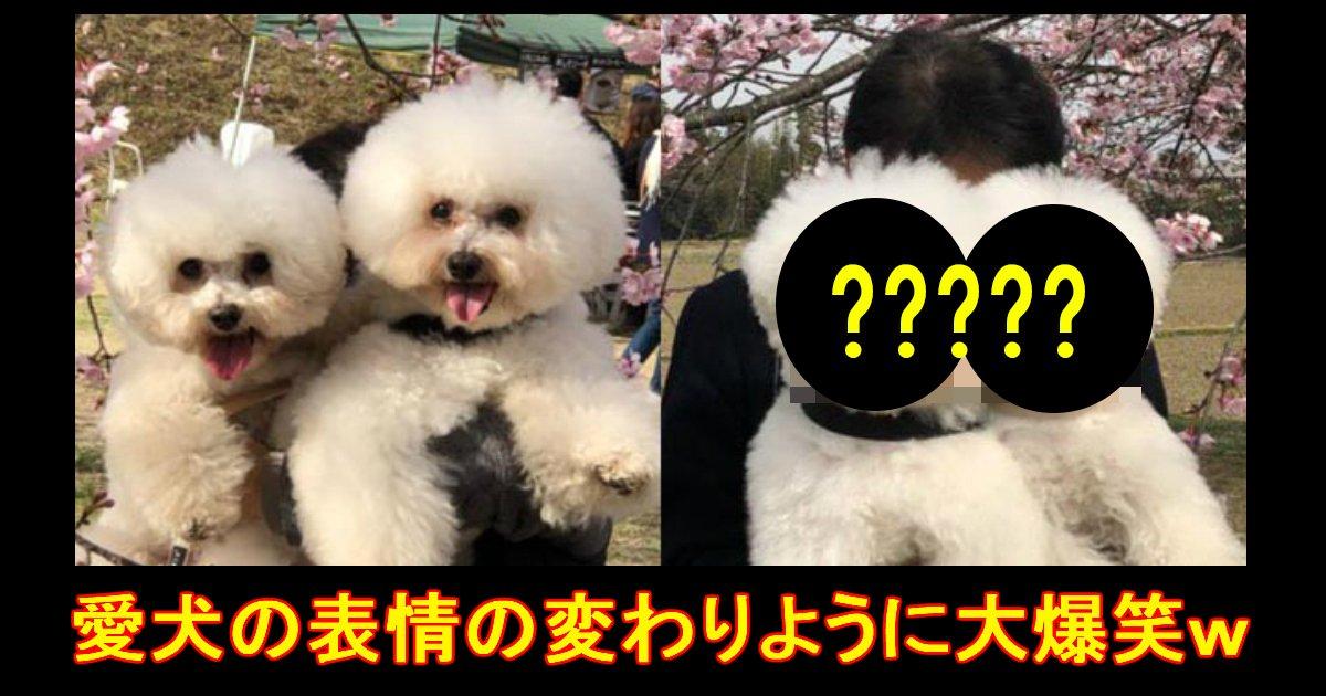 doggo - 母親・父親に対して差がありすぎる愛犬の表情に爆笑!