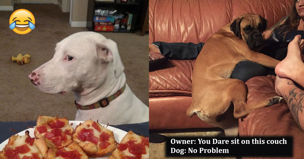 dogs - 10 Times Dogs Tried To Break The Human Rules And Their Gestures Will Make Your Day
