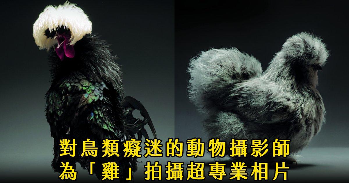 e69caae591bde5908d 1 21.png?resize=1200,630 - 攝影師為雞拍攝專業寫真,網友看完跪了「原來雞雞這麼美!」