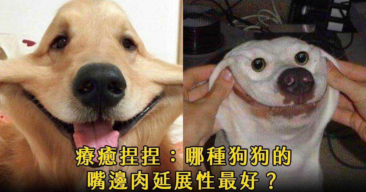 e69caae591bde5908d 1 33.png?resize=300,169 - 捏狗狗臉頰療癒圖集:哪一種汪星人的嘴邊肉延展性最好?