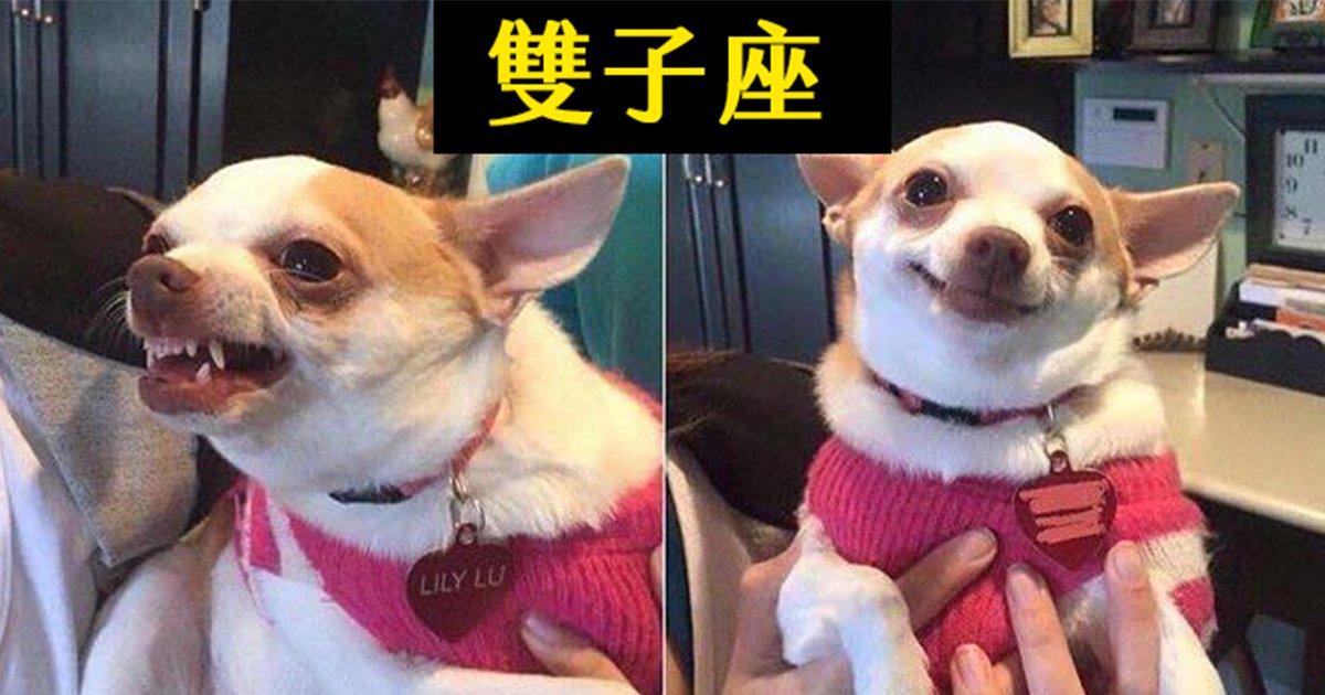e69caae591bde5908d 1 42.png?resize=300,169 - 國外網友把12星座「擬狗化」票選出「最會演」的狗演員!