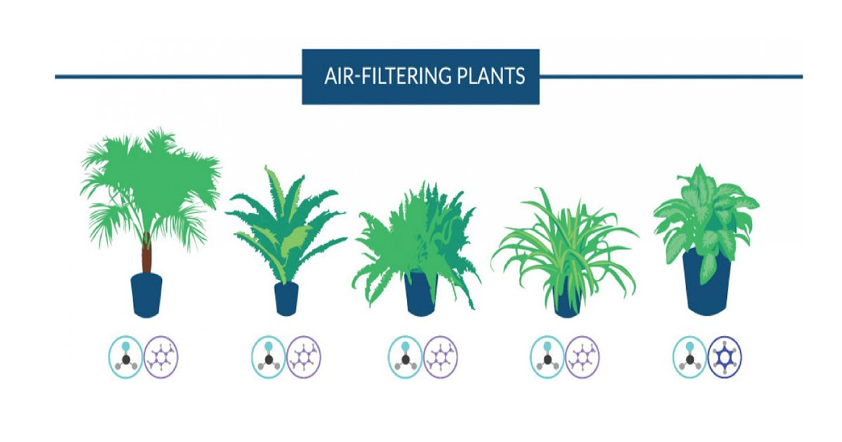 ec8db8eb84ac6 - NASA Recommended Plants Will Keep the Air Around You Purified