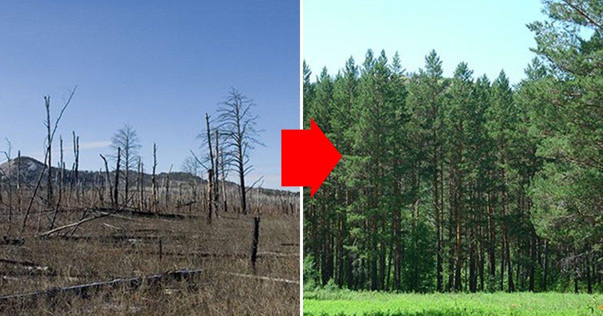 eca09cebaaa9 ec9786ec9d8c 1 44.jpg?resize=1200,630 - 국내의 한 기업이 몽골 초원에 천만 그루 나무 심은 사연