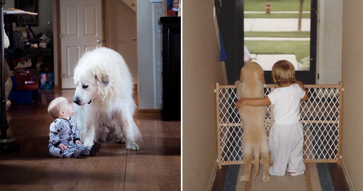 eca09cebaaa9 ec9786ec9d8c 49.png?resize=300,169 - 보는 이들을 뭉클하게 만드는 '강아지와 아이' 사진들 (사진 20)