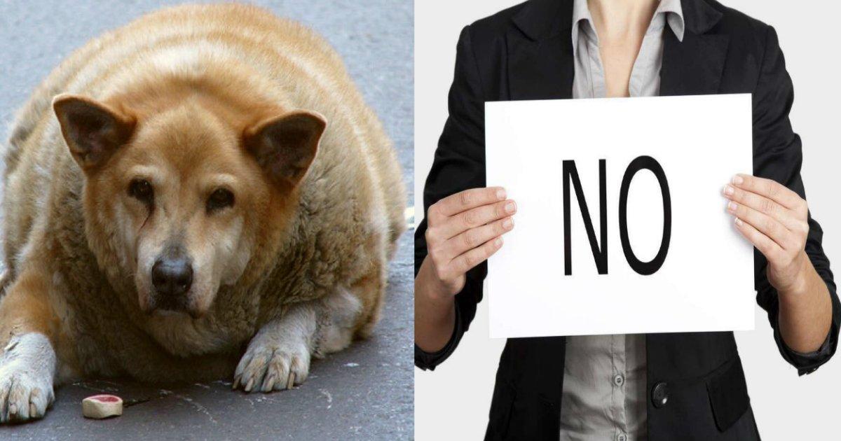 fatdog - Un beagle obèse arrive pour être euthanasié, la SPA décide de le faire maigrir à la place