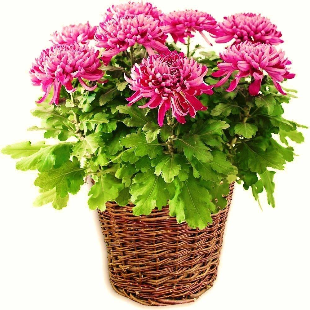 plante d'intérieur recommandée par nasa-1