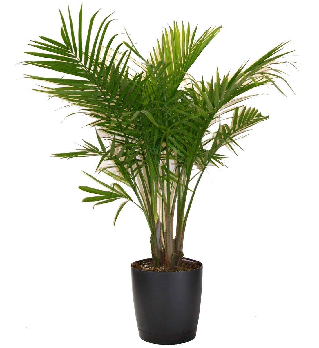 plante d'intérieur recommandée par nasa-7