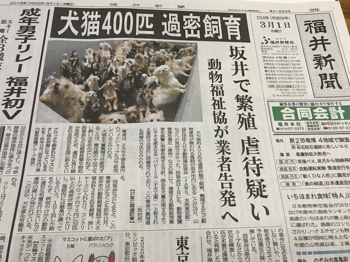 パピーミル 福井県에 대한 이미지 검색결과