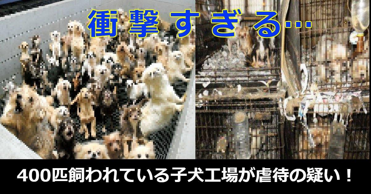 inu.jpg?resize=1200,630 - 衝撃!400匹飼われている子犬工場がまるですし詰め状態…虐待の疑いで摘発される