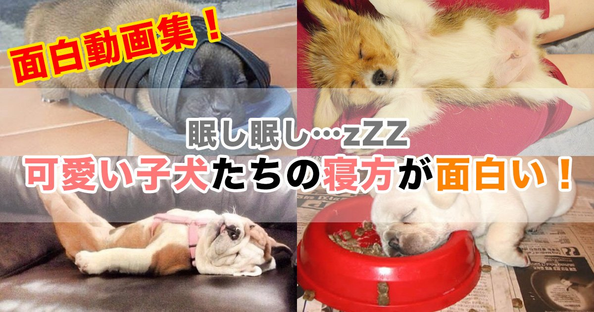 jw surugi 8.jpg?resize=1200,630 - 【面白動画集】 眠し眠し…zZZ 可愛い子犬たちの寝方が面白い!