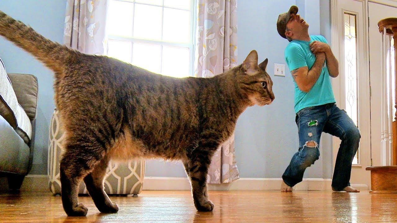 飼いネコの前で死んだふりをしたらどうなる? ある男性がやってみたって動画が人気에 대한 이미지 검색결과