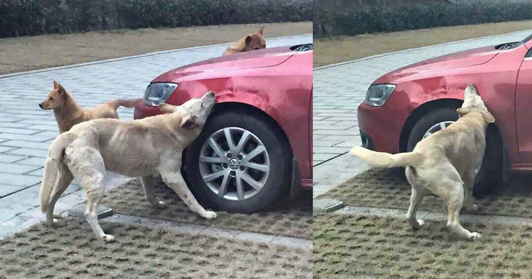 maxresdefault 6.jpg?resize=300,169 - Cão ataca carro por vingança!