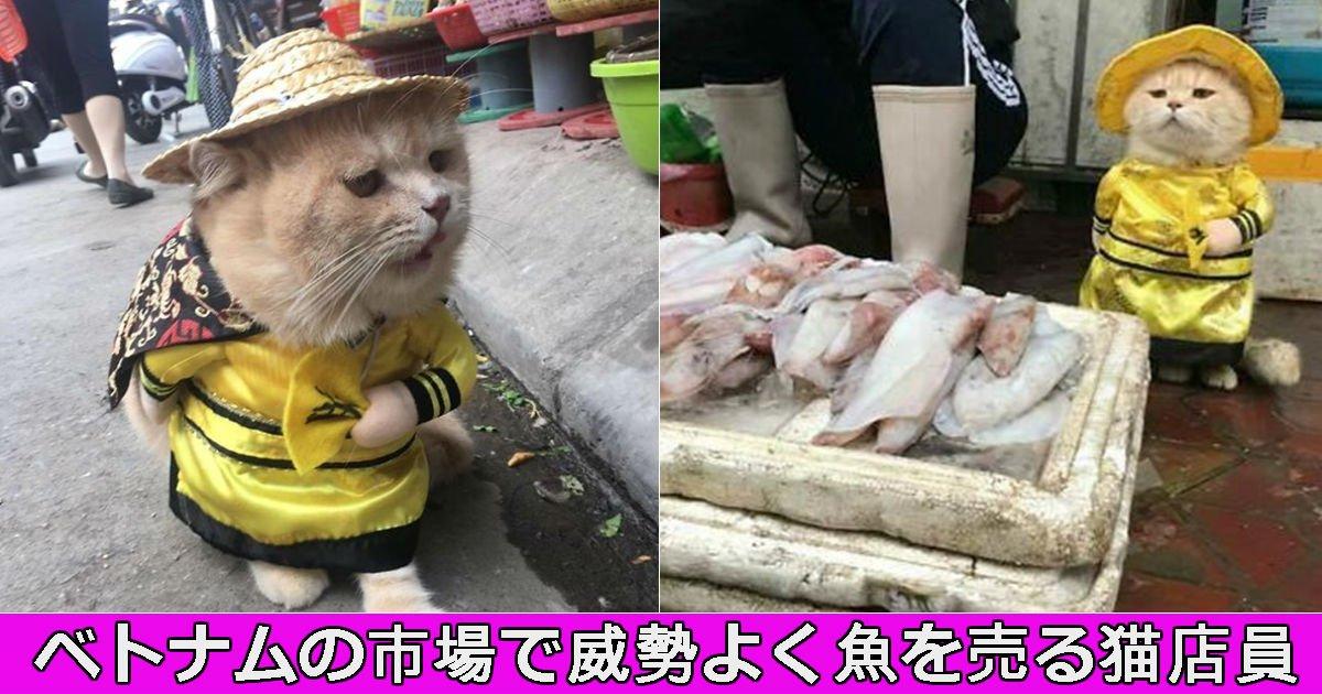 neko.jpg?resize=1200,630 - ベトナムで大人気!市場で魚を売る猫が実在した件