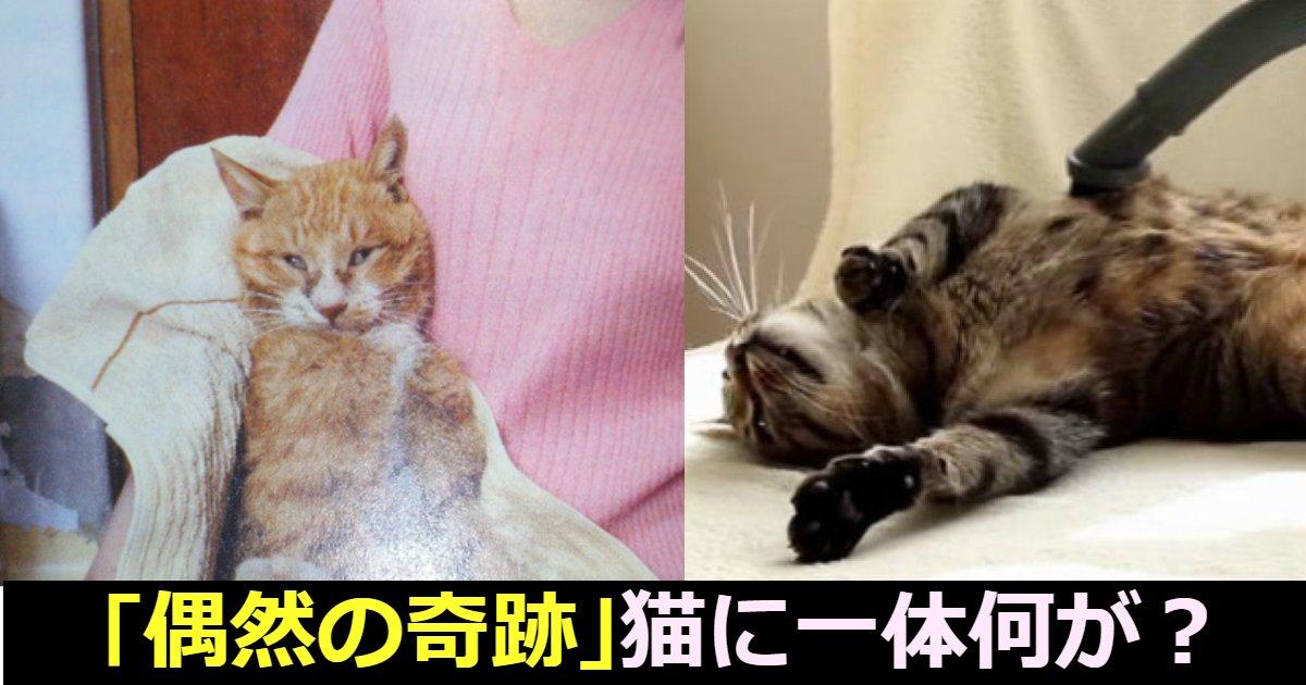 neko - 家出した猫が5年後に隣の家で見つかった件、そんなことあるの?