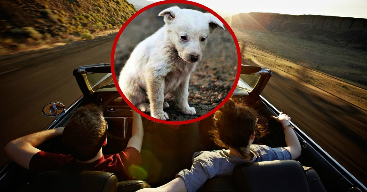 newfamily.jpg?resize=1200,630 - Couple Takes A Road Trip And Finds Stray Dog Lying Beside Their Car