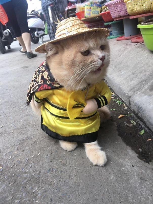 popular in vietnam a cat 20180307154129 10 5a9e518841443 605 - ベトナムで大人気!市場で魚を売る猫が実在した件