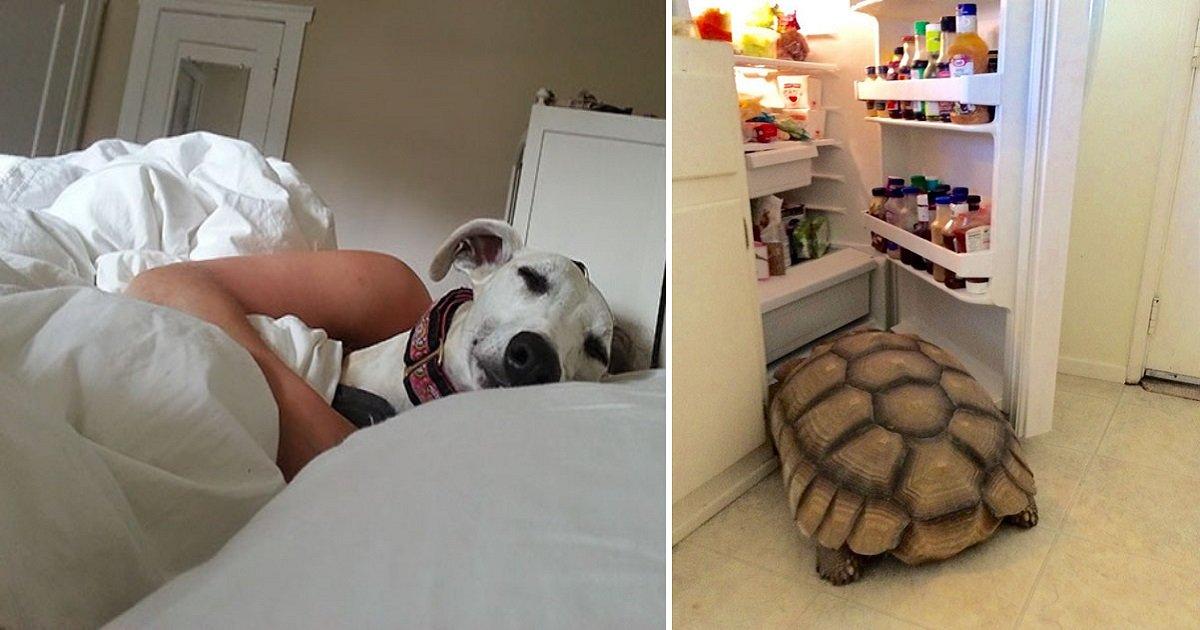 """rk2.jpg?resize=1200,630 - 20+ mais hilariantes """"acordei com isso"""" de donos com seus animais de estimação"""