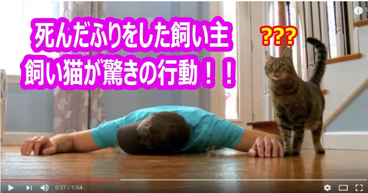 sindahuri neko th - 飼い猫の前で死んだふりをした男性、その瞬間猫が驚きの行動に!