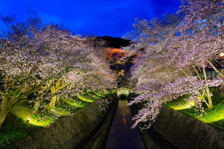 春のライトアップ~桜の琵琶湖疏水~에 대한 이미지 검색결과