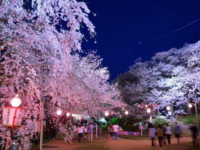赤湯温泉桜まつり お花見에 대한 이미지 검색결과