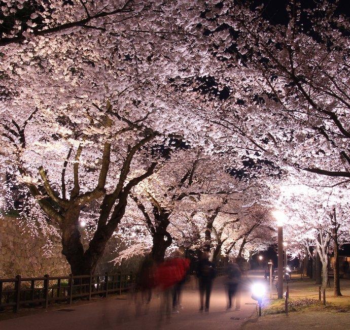 兼六園無料開園&金沢城・兼六園観桜期ライトアップ에 대한 이미지 검색결과