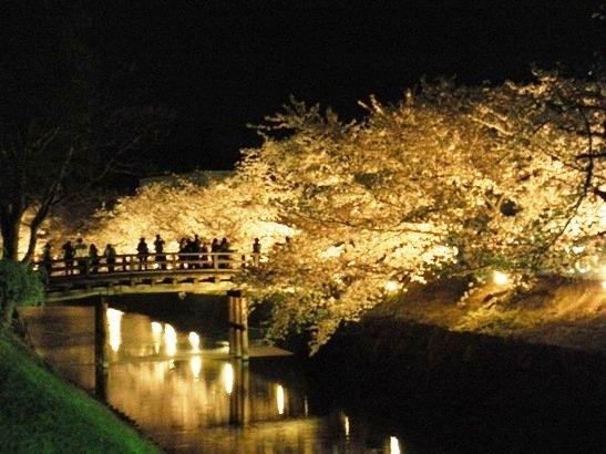 国宝松本城 桜並木 光の回廊에 대한 이미지 검색결과