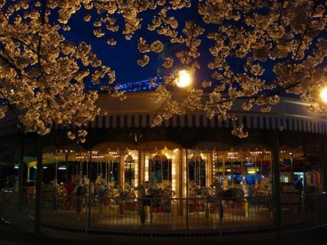 夜桜みナイト에 대한 이미지 검색결과