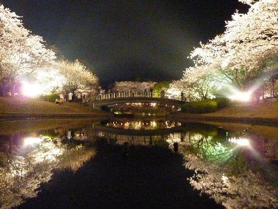 桜並木ライトアップ(はままつフラワーパーク)에 대한 이미지 검색결과