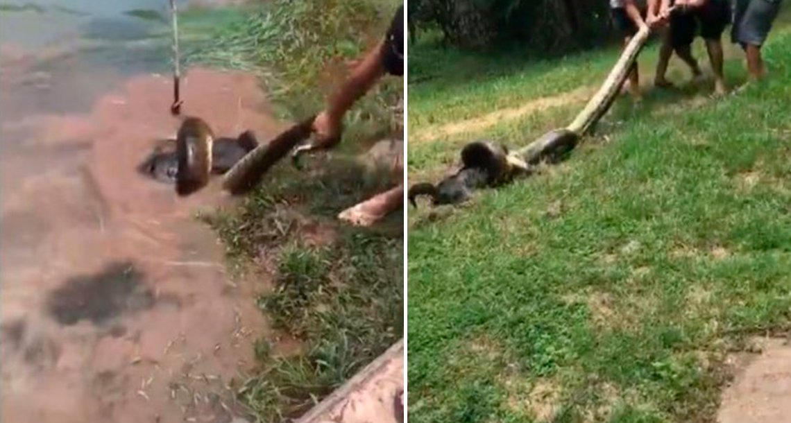 template coverpero.png?resize=1200,630 - El espectacular rescate de un perro atrapado por una anaconda
