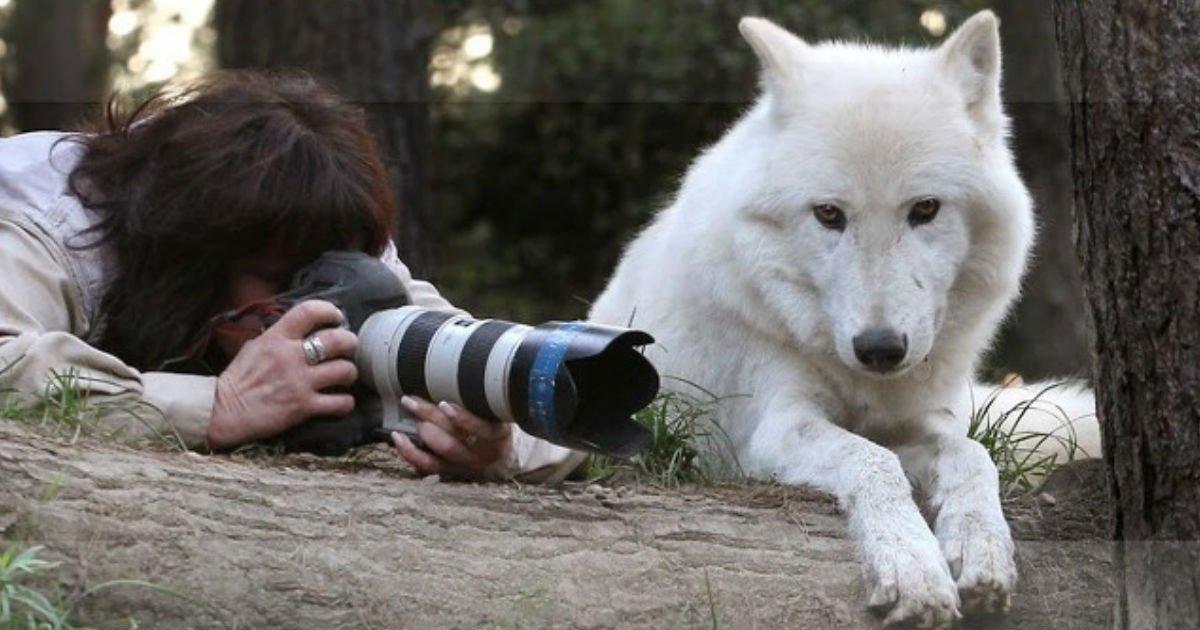 thumb 157.jpg?resize=300,169 - 야생 동물들과 친구같은 '동물 사진작가'