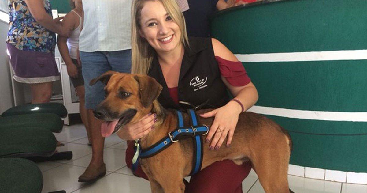 thumbnail5gaq4ttepiui.png?resize=300,169 - Cãozinho, que ficou 4 meses esperando o dono na porta do hospital, é adotado por funcionária