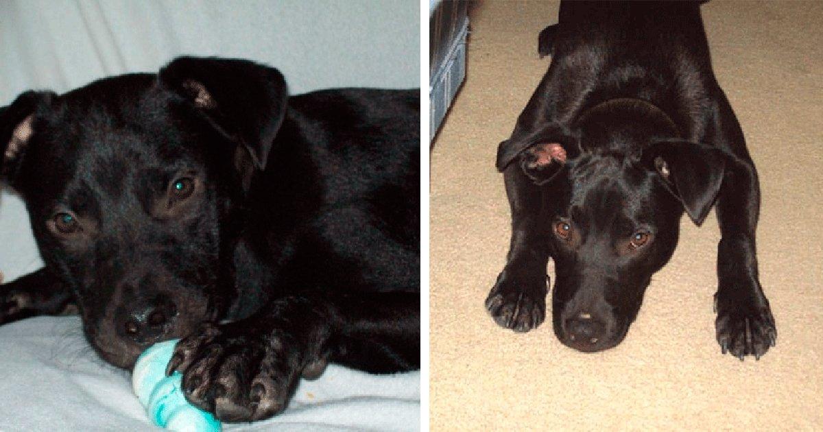 thumbnail5gaq4ttw5tp.png?resize=1200,630 - Cachorro surpreende pais ao se dar bem com o novo bebê da família