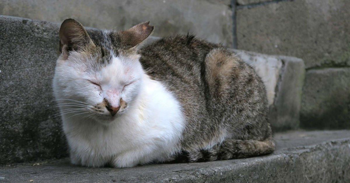 thunb 1.jpg?resize=300,169 - 잃어버린 고양이 2년 만에 찾은 썰