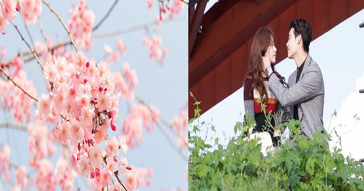 tjaspf.png?resize=300,169 - 썸남·썸녀와 꼭 같이 걷고 싶은 '봄꽃 축제' 7