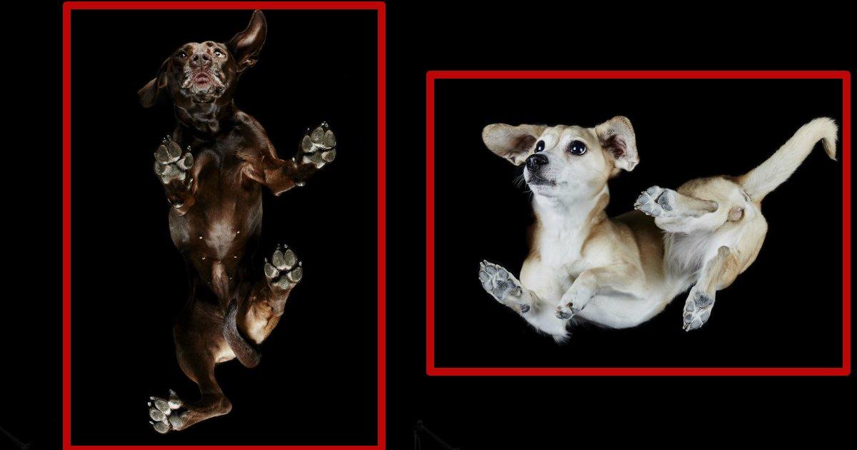 undersidedogs.jpg?resize=300,169 - Interesting Photography Of Under-Side Of Dogs