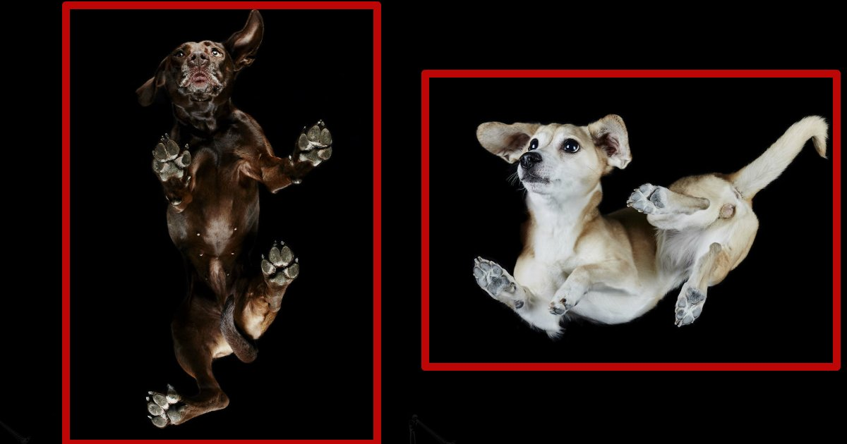 undersidedogs - Interesting Photography Of Under-Side Of Dogs