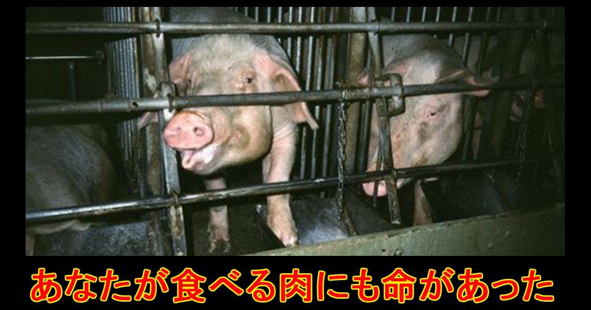 unnamed file 17 - あなたが今食べている牛肉・豚肉・鶏肉。家畜の悲惨な環境を知っていますか?